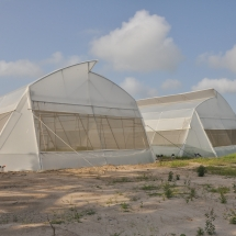 construction-of-green-house-tomatoes-research-centre-1